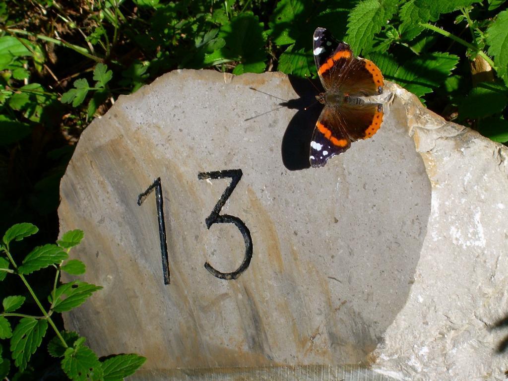 Die 13.