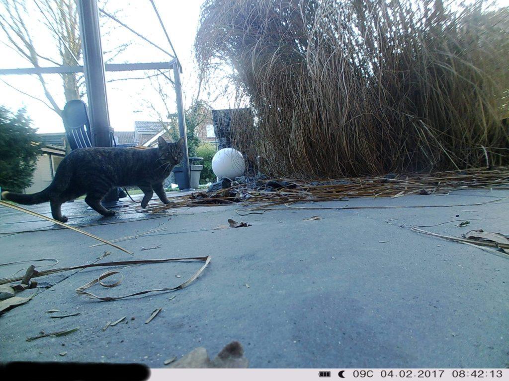 Wildkamera: Katze