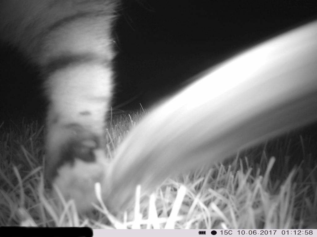 Nachtaufnahme: Katze