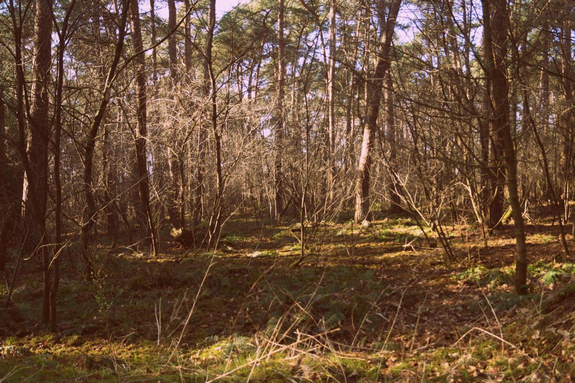 Wald: Mitten im Wald