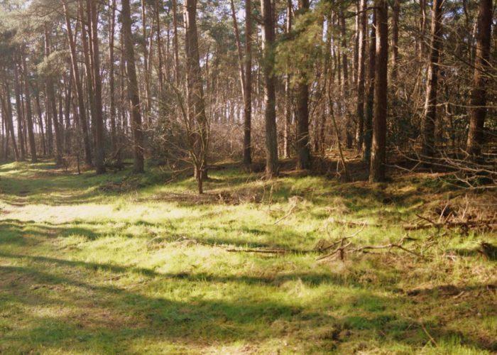 Wald: helle Lichtung
