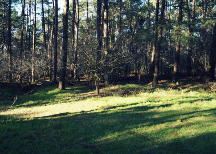 Wald: Lichtung