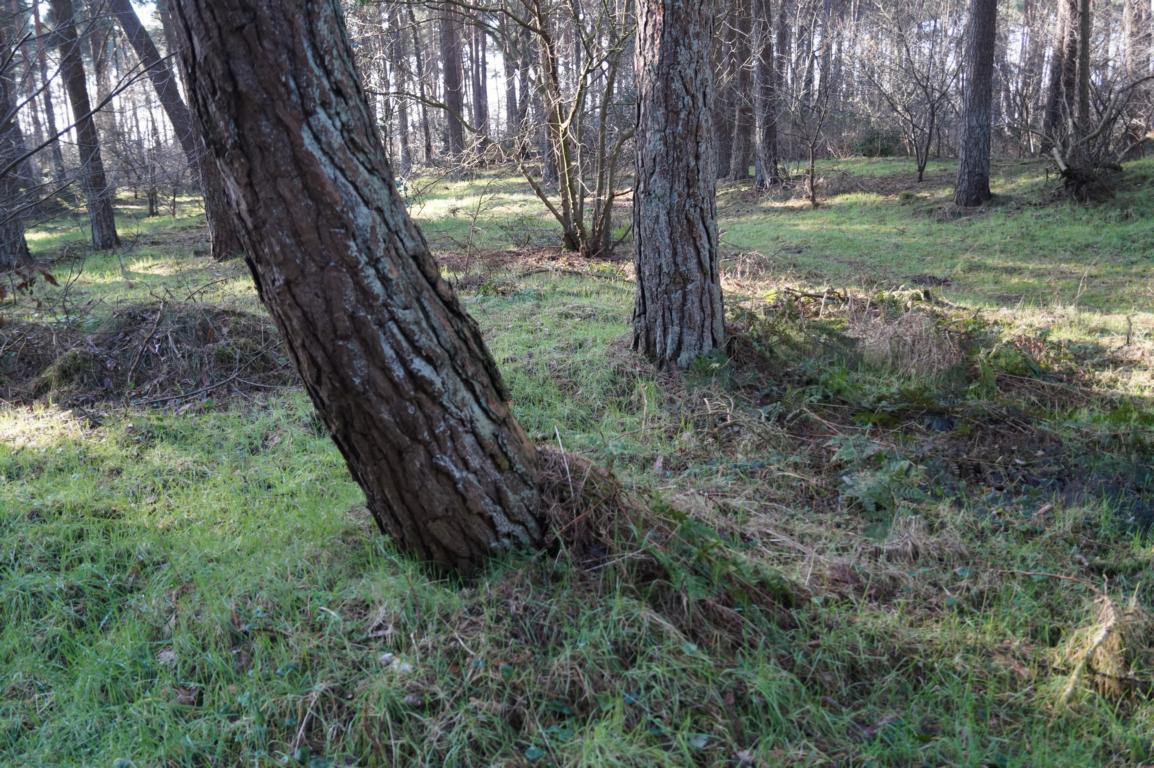 Wald: Bäume