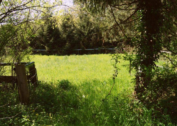 Grüne Bilder: Tor zum Grün