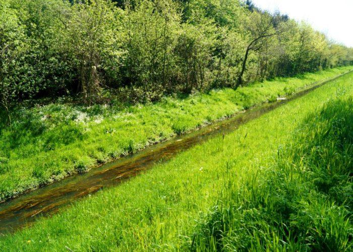 Grüne Bilder: Wasserlauf