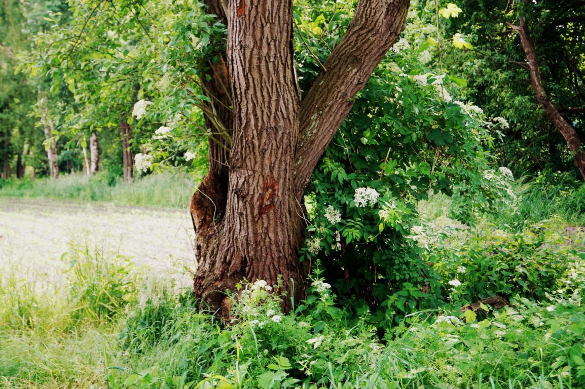 Grüne Bilder: Baum