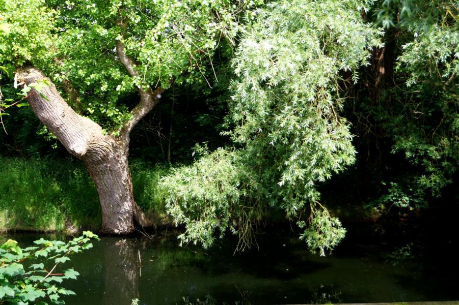 Hooksiel: Natur