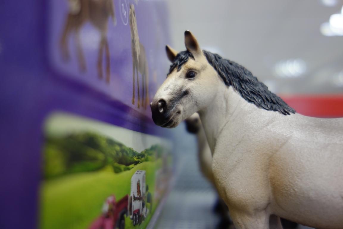 Miniatur Pferd