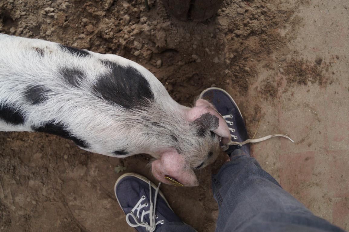 Hand & Fuß: Schwein haben