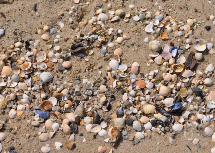 Farbenfroher Strand