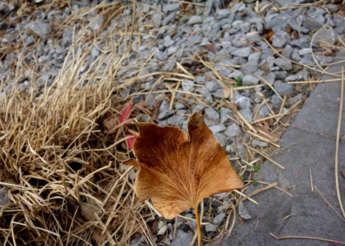 Blätter: Großes Blatt