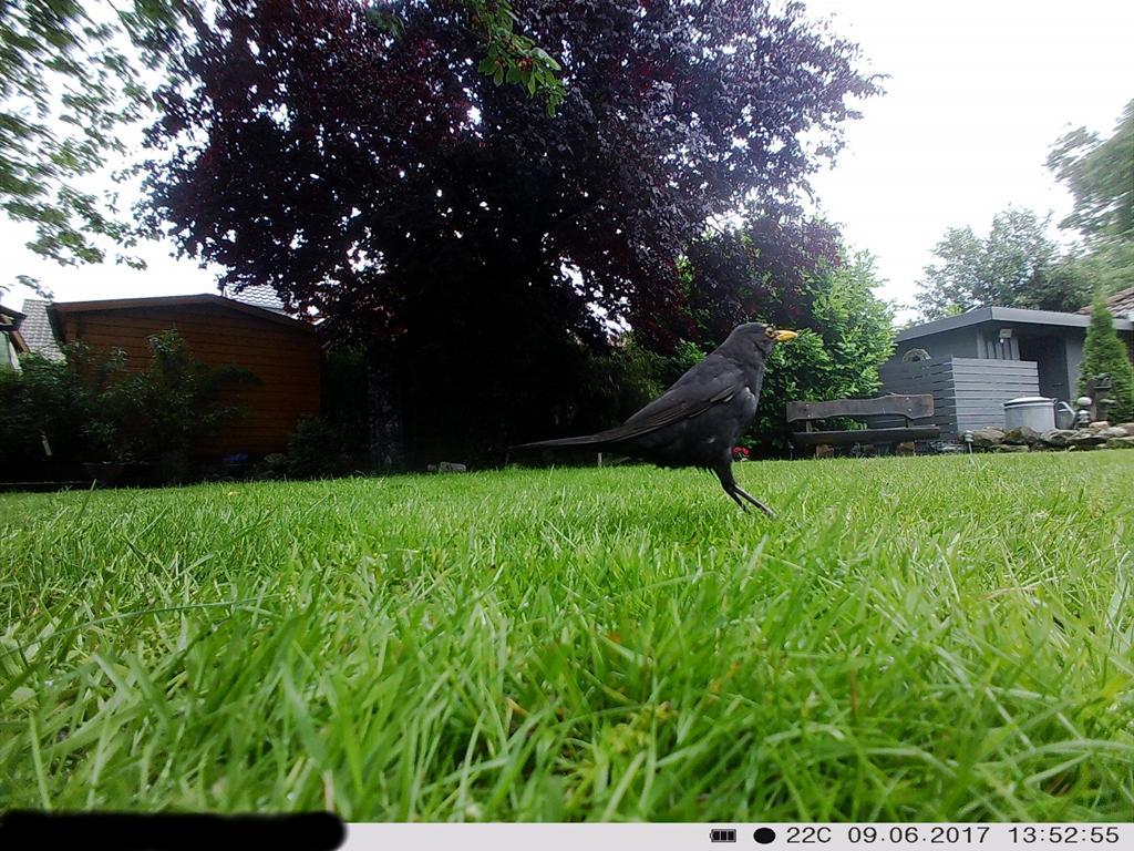 Bewegungsaufnahme: Hüpfender Vogel