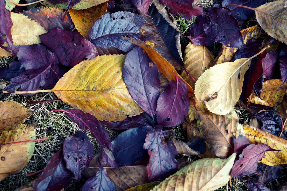 Blätter: Herbstlaub