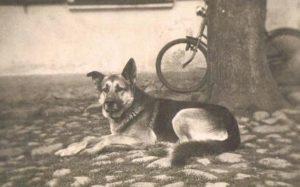 Altes Hundefoto