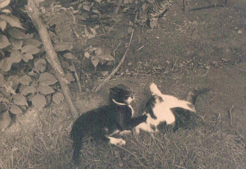 Alte Tierfotos: Katzen