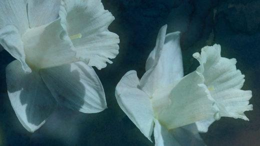 Ungarische Wappen: Heilige Lilien brauchen Quellwasser
