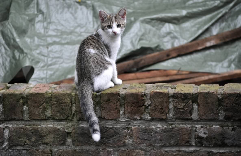 Tiere: Katze
