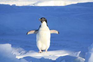 Unnützes Wissen: Norwegische Garde und der Pinguin