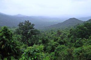 Einschlafgeräusche: Regenwald