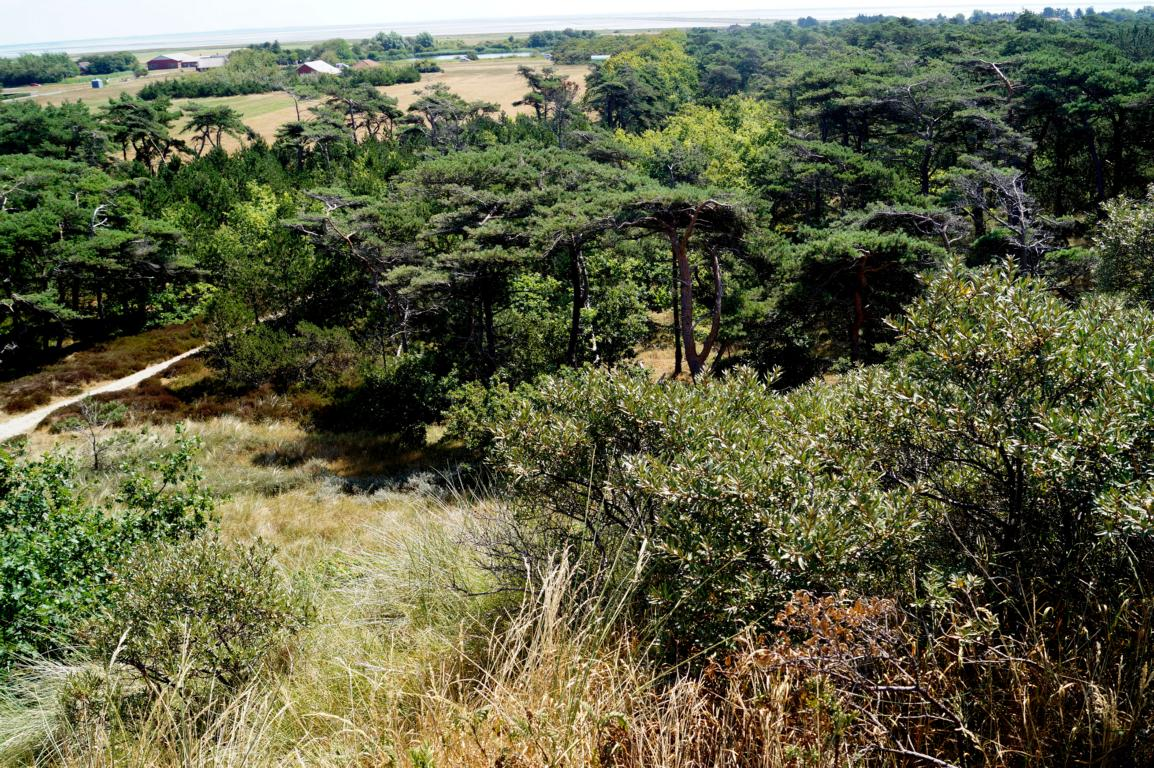 Rømø: Landschaft