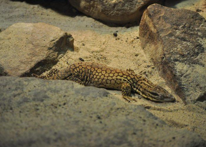 Tiere: Reptil