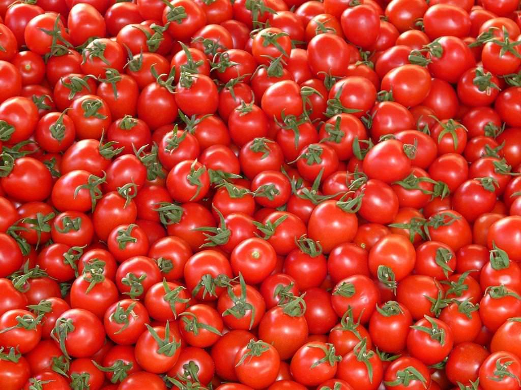 Kuriose Erfindungen: Tomatenschmerzmesser