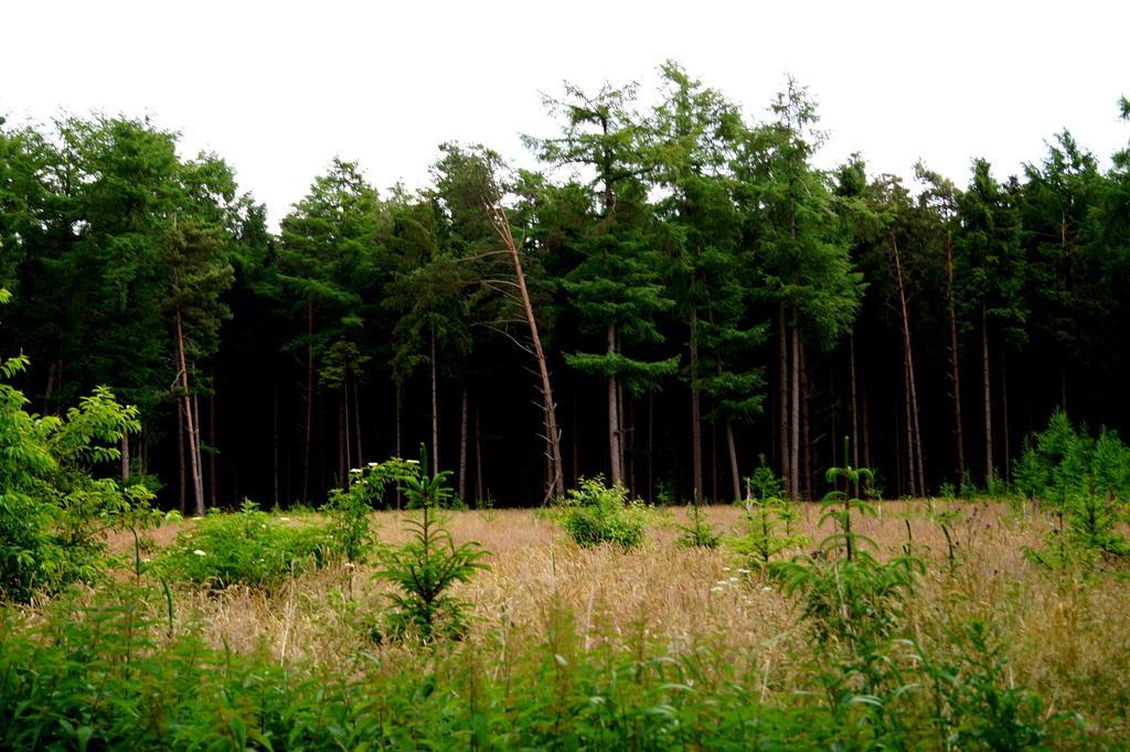 Wald: Ansicht von außen