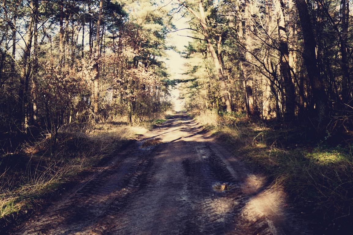 Wege: Waldweg