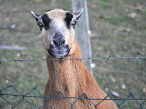 Paradoxien: Das Ziegenproblem