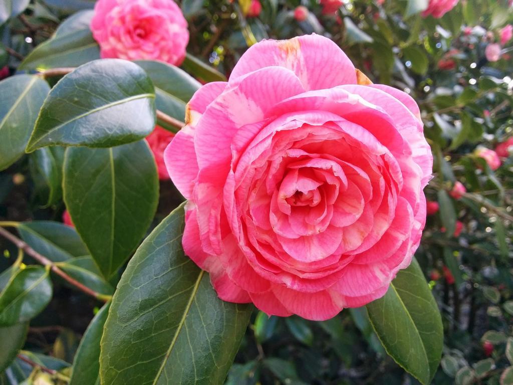 Satzgenerator: Die aufdringliche Katja tritt gegen deinen Rhododendron